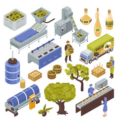 Olive production set vector