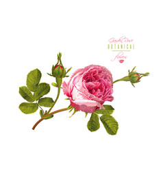 Rose realistic vector
