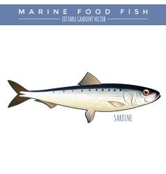 Sardine Marine Food Fish vector image