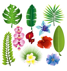 set colorful tropical vector image