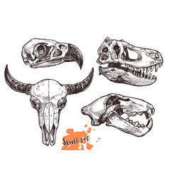sketch animals skull lion eagle t-rex buffalo vector image