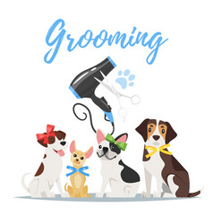 grooming concept with dogs vector image vector image