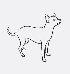 Chihuahua pet dog sketches vector