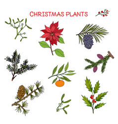 Collection of winter plants christmas design vector