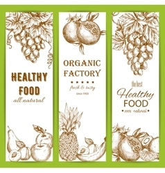 Healthy natural organic fruit food sketch banners vector