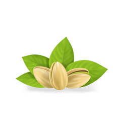 realistic detailed pistachio nuts set with leaves vector image