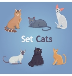 Collection of Cats of Different Breeds Set cats vector image vector image