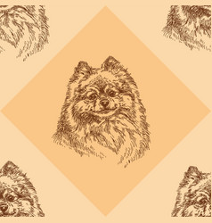 seamless pattern with small pomeranian on orange vector image