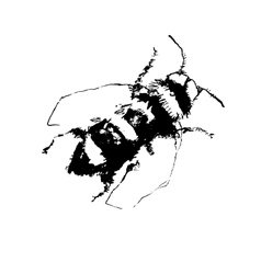 Depicting a bee hand drawn vector