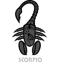 image of scorpio astrological sign of zodiac vector image