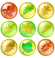 leaves buttons set vector image vector image