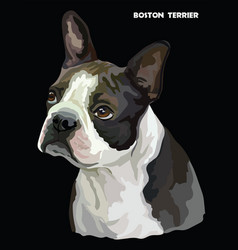Boston terrier colorful portrait vector