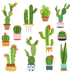 cactus pots home plants cacti flowers in ceramic vector image