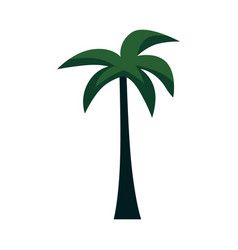 exotic palm tree for summer tropical design vector image