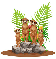 Four meerkats standing on stone vector