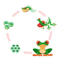 Frog life cycle amphibian growth development vector