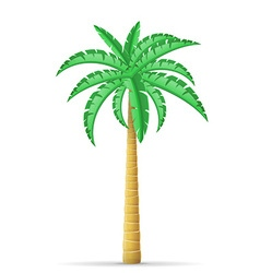 palm tree 11 vector image