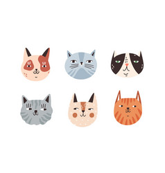 set different breeds cat muzzle flat vector image