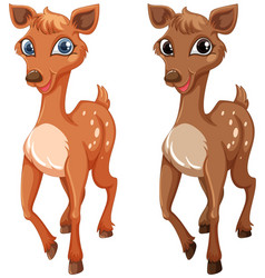 Two fawns on white background vector