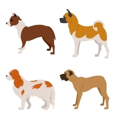 Collection of purebred dogs isolated on white vector image