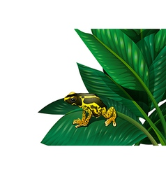 A plant with a frog vector image
