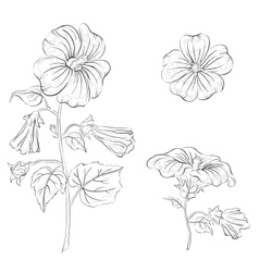 Flowers mallow contours vector image