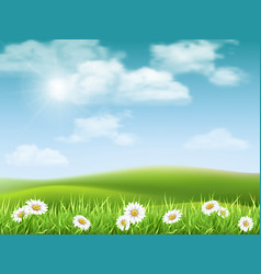 Landscape with chamomile hills vector