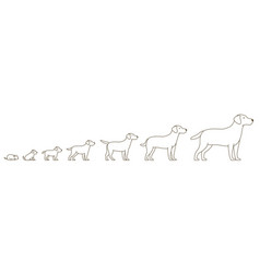 Stages dog growth set from puppy to adult dog vector