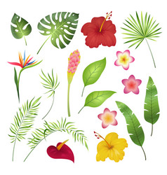 Tropical flowers and leaves caribbean tropical vector