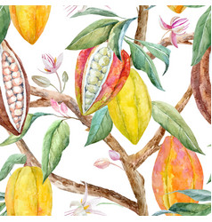 watercolor cacao pattern vector image