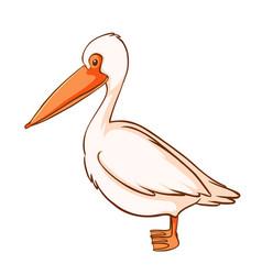 pelican bird on white background vector image
