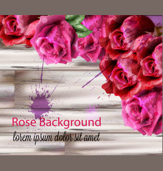 watercolor roses background beautiful vector image