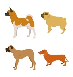 Set of purebred dogs isolated on white background vector image vector image