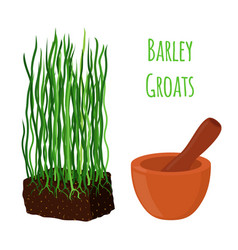 Barley grass wheat mortar pestle cartoon vector