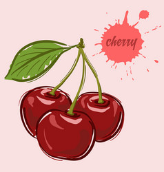 hand draw of cherry vector image
