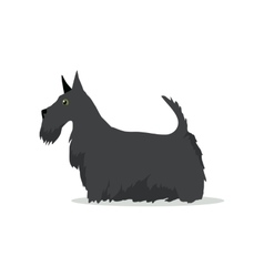 Scottish Terrier Aberdeen Terrier Scottie Breed vector