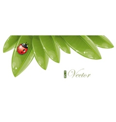 green leaves design with ladybug vector image