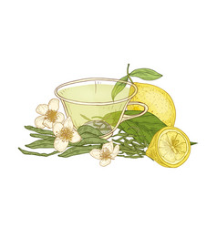 Colorful drawing of cup of tea fresh lemon fruit vector