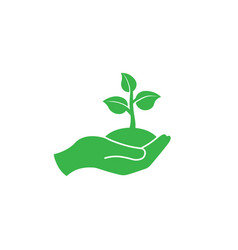 hand holding seedlings with leaves or palm vector image