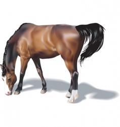 Horse illustration vector