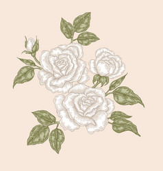 white rose flowers and leaves in vintage style vector image