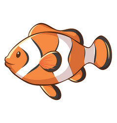 Cute clownfish on white background vector