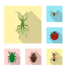 design insect and fly icon set of vector image