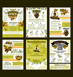 posters of olives for organic olive oil vector image
