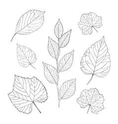 Outline leaves set vector image