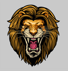 angry roaring male lion head vector image