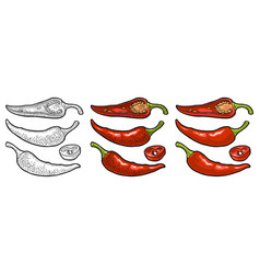 chilli whole half and slice vintage vector image