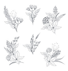 collection hand drawn herbs and vector image