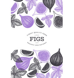 hand drawn fig fruits design template organic vector image