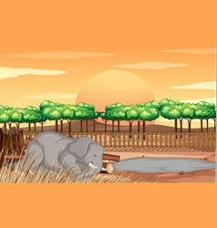 scene with elephant at zoo vector image